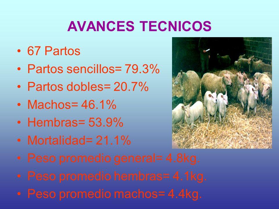 AVANCES TECNICOS 67 Partos Partos sencillos= 79.3% Partos dobles= 20.7% Machos= 46.1% Hembras= 53.9% Mortalidad= 21.1% Peso promedio general= 4.8kg.
