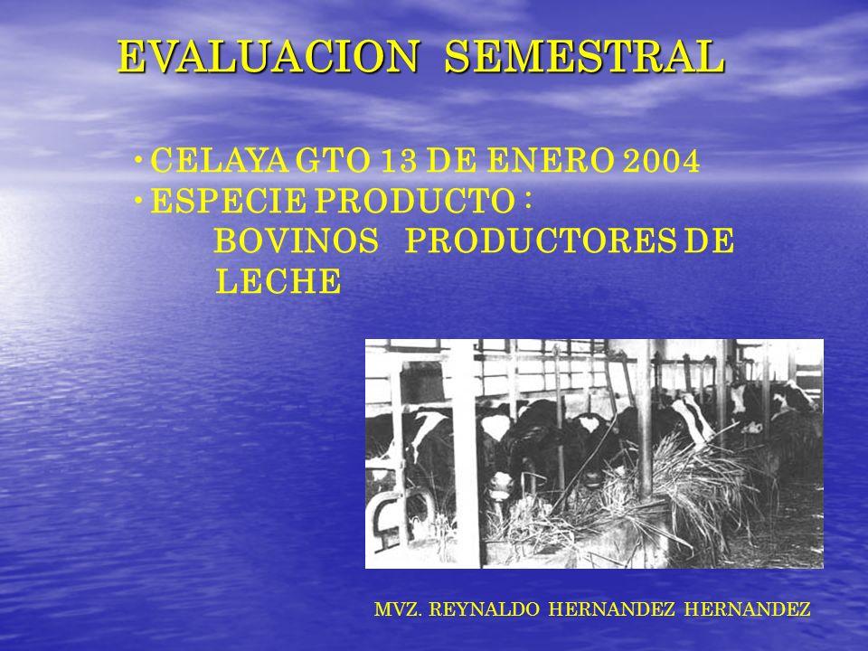 EVALUACION SEMESTRAL CELAYA GTO 13 DE ENERO 2004 ESPECIE PRODUCTO : BOVINOS PRODUCTORES DE LECHE MVZ. REYNALDO HERNANDEZ HERNANDEZ