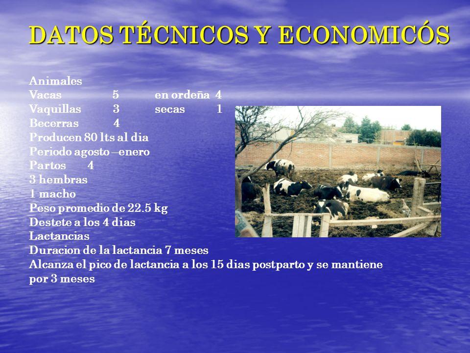DATOS TÉCNICOS Y ECONOMICÓS Animales Vacas 5 en ordeña 4 Vaquillas 3 secas 1 Becerras 4 Producen 80 lts al dia Periodo agosto –enero Partos 4 3 hembra