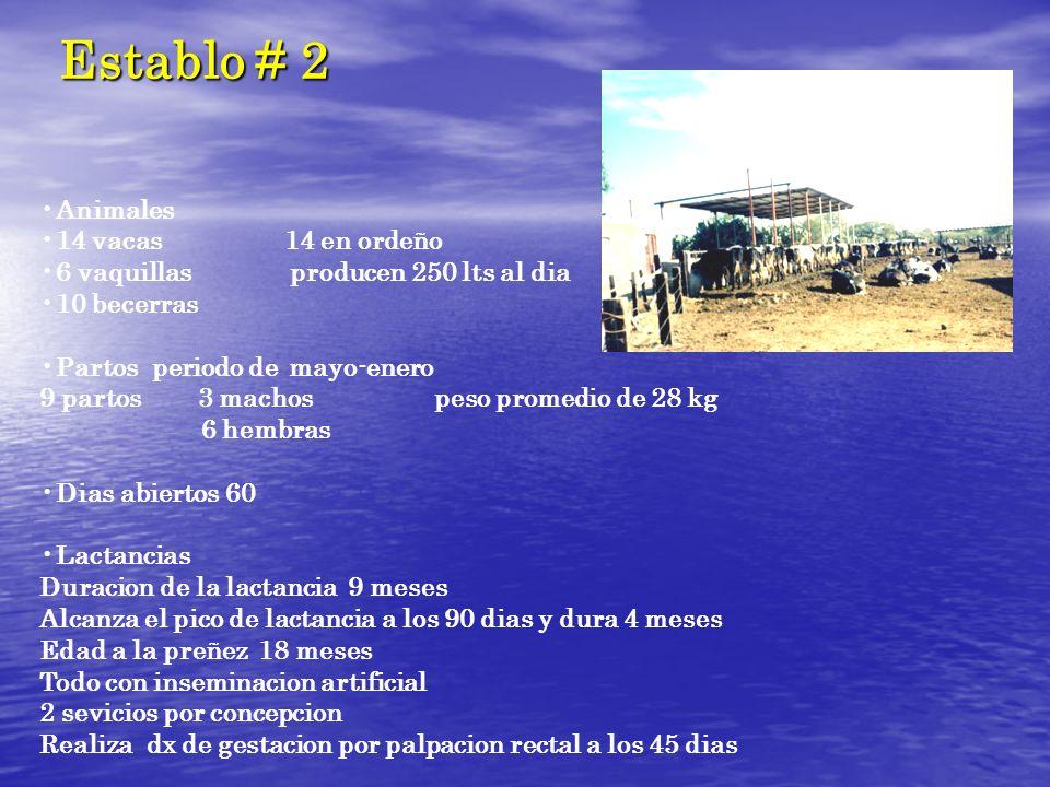Animales 14 vacas 14 en ordeño 6 vaquillas producen 250 lts al dia 10 becerras Partos periodo de mayo-enero 9 partos 3 machos peso promedio de 28 kg 6
