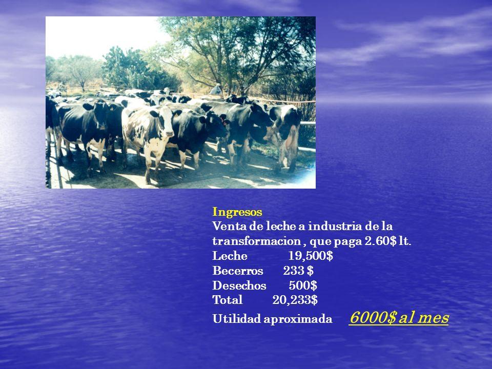 Ingresos Venta de leche a industria de la transformacion, que paga 2.60$ lt. Leche 19,500$ Becerros 233 $ Desechos 500$ Total 20,233$ Utilidad aproxim