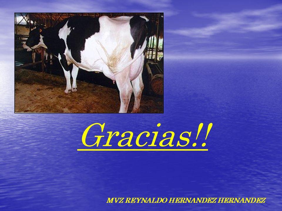 Gracias!! MVZ REYNALDO HERNANDEZ HERNANDEZ