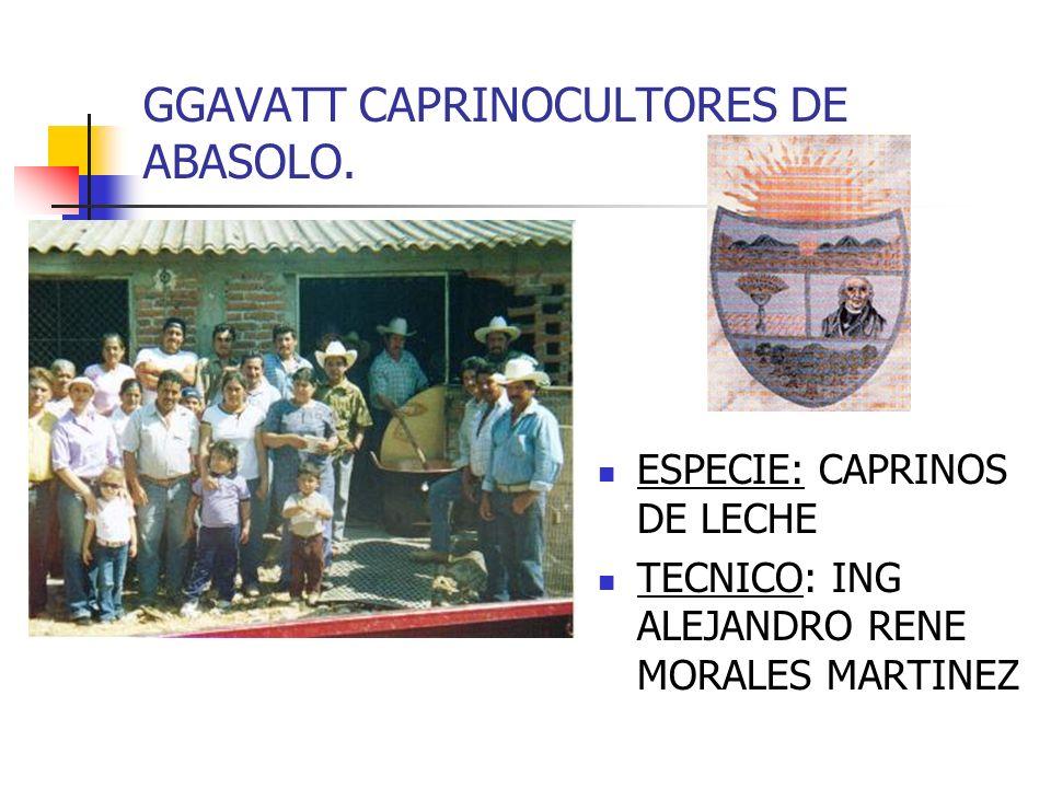 GGAVATT CAPRINOCULTORES DE ABASOLO. ESPECIE: CAPRINOS DE LECHE TECNICO: ING ALEJANDRO RENE MORALES MARTINEZ