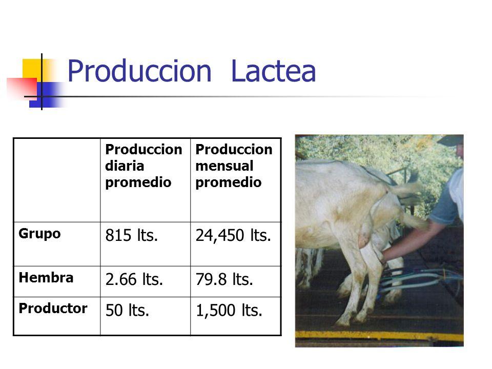 Produccion Lactea Produccion diaria promedio Produccion mensual promedio Grupo 815 lts.24,450 lts. Hembra 2.66 lts.79.8 lts. Productor 50 lts.1,500 lt