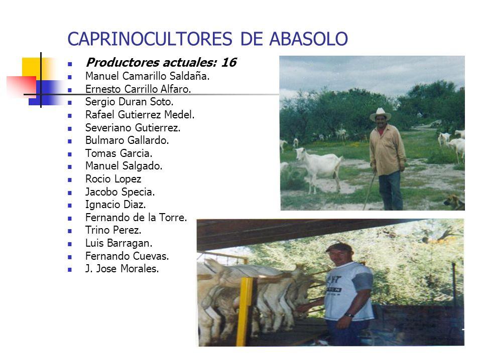 CAPRINOCULTORES DE ABASOLO Productores actuales: 16 Manuel Camarillo Saldaña. Ernesto Carrillo Alfaro. Sergio Duran Soto. Rafael Gutierrez Medel. Seve