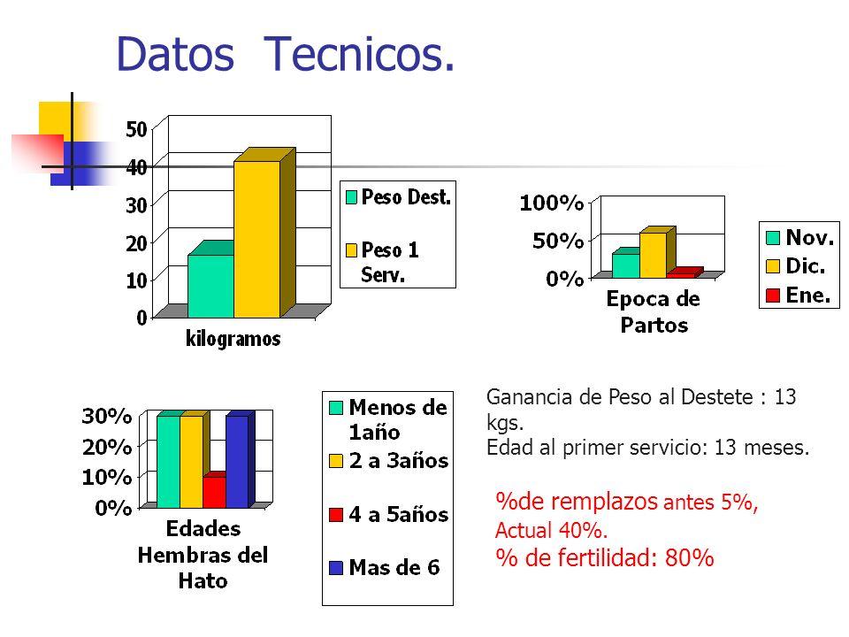 Datos Tecnicos. Ganancia de Peso al Destete : 13 kgs. Edad al primer servicio: 13 meses. %de remplazos antes 5%, Actual 40%. % de fertilidad: 80%