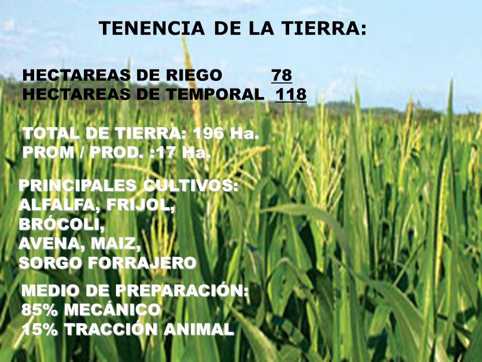 TENENCIA DE LA TIERRA: TOTAL DE TIERRA: 196 Ha. PROM / PROD. :17 Ha. PRINCIPALES CULTIVOS: ALFALFA, FRIJOL, BRÓCOLI, AVENA, MAIZ, SORGO FORRAJERO MEDI