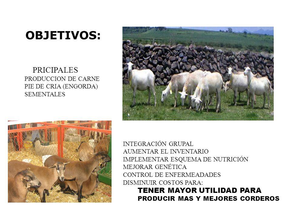 OBJETIVOS: PRICIPALES PRODUCCION DE CARNE PIE DE CRIA (ENGORDA) SEMENTALES INTEGRACIÓN GRUPAL AUMENTAR EL INVENTARIO IMPLEMENTAR ESQUEMA DE NUTRICIÓN