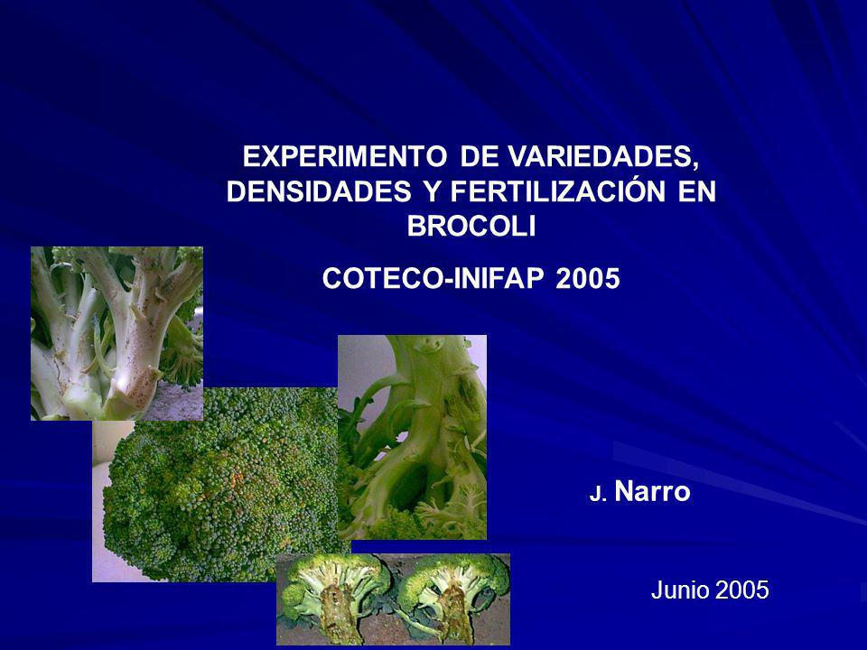 EXPERIMENTO DE VARIEDADES, DENSIDADES Y FERTILIZACIÓN EN BROCOLI COTECO-INIFAP 2005 J. Narro Junio 2005
