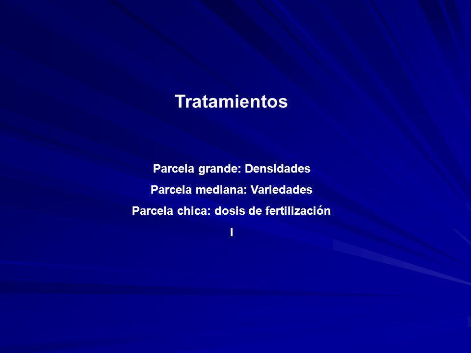 Tratamientos Parcela grande: Densidades Parcela mediana: Variedades Parcela chica: dosis de fertilización I