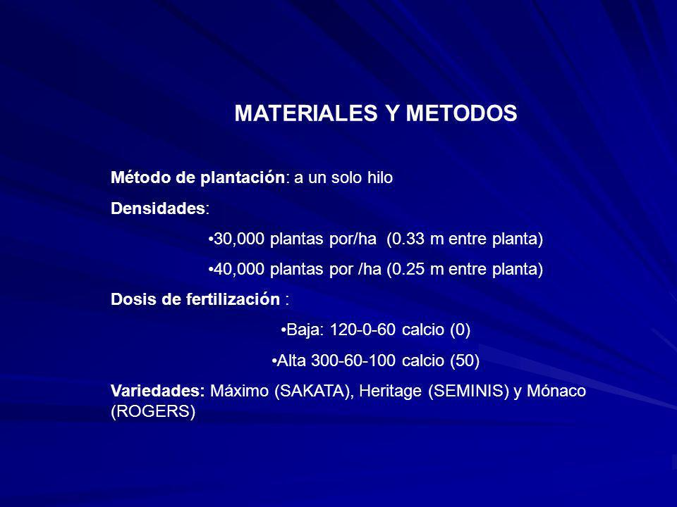 MATERIALES Y METODOS Método de plantación: a un solo hilo Densidades: 30,000 plantas por/ha (0.33 m entre planta) 40,000 plantas por /ha (0.25 m entre