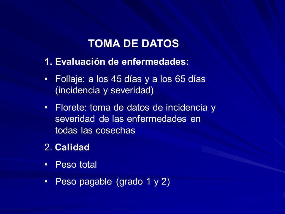 TOMA DE DATOS 1.Evaluación de enfermedades: Follaje: a los 45 días y a los 65 días (incidencia y severidad) Florete: toma de datos de incidencia y sev