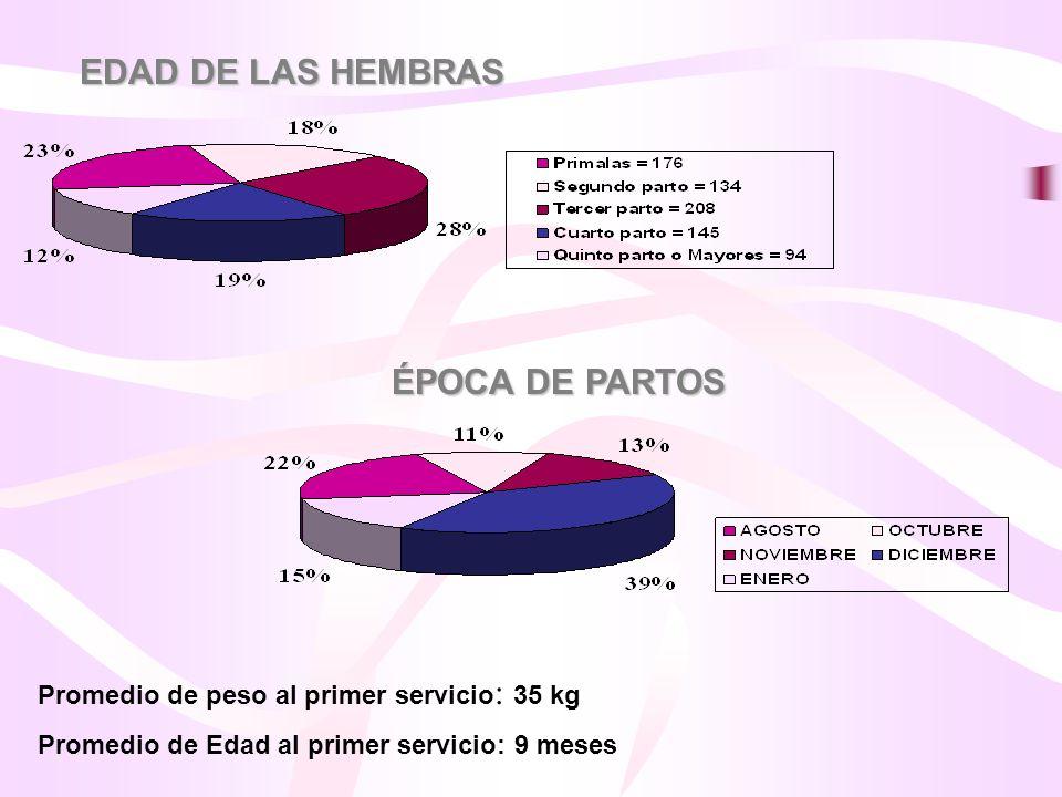 EDAD DE LAS HEMBRAS ÉPOCA DE PARTOS Promedio de peso al primer servicio : 35 kg Promedio de Edad al primer servicio: 9 meses