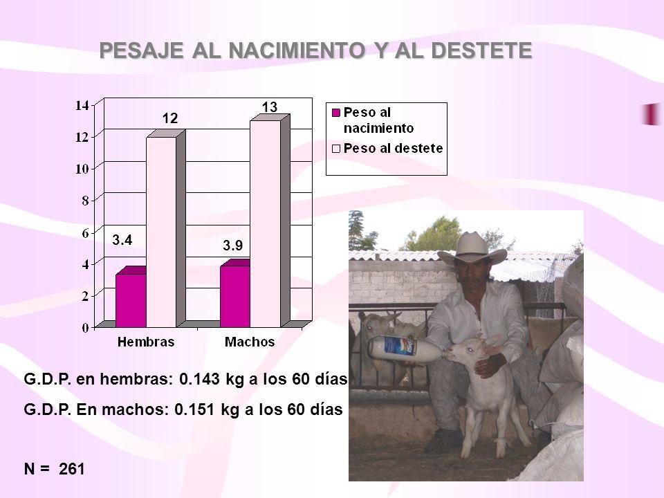 PESAJE AL NACIMIENTO Y AL DESTETE G.D.P. en hembras: 0.143 kg a los 60 días G.D.P. En machos: 0.151 kg a los 60 días N = 261 3.4 3.9 12 13