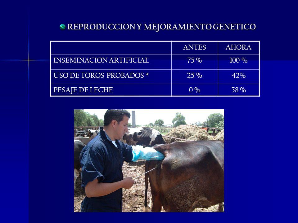 REPRODUCCION Y MEJORAMIENTO GENETICO REPRODUCCION Y MEJORAMIENTO GENETICO ANTESAHORA INSEMINACION ARTIFICIAL75 %100 % USO DE TOROS PROBADOS *25 %42% P
