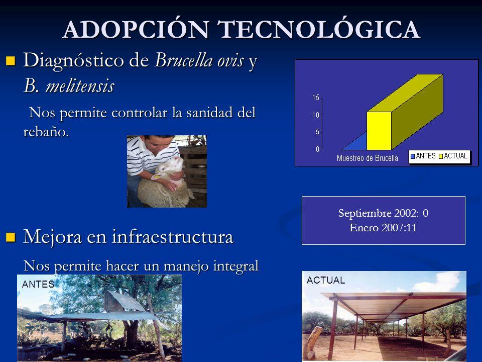ADOPCIÓN TECNOLÓGICA Diagnóstico de Brucella ovis y B. melitensis Diagnóstico de Brucella ovis y B. melitensis Nos permite controlar la sanidad del re