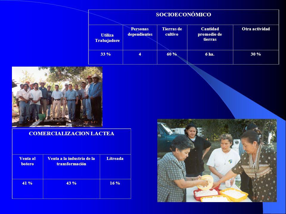 COMERCIALIZACION LACTEA Venta al botero Venta a la industria de la transformación Litreada 41 %43 %16 % SOCIOECONÓMICO Personas dependientes Tierras d