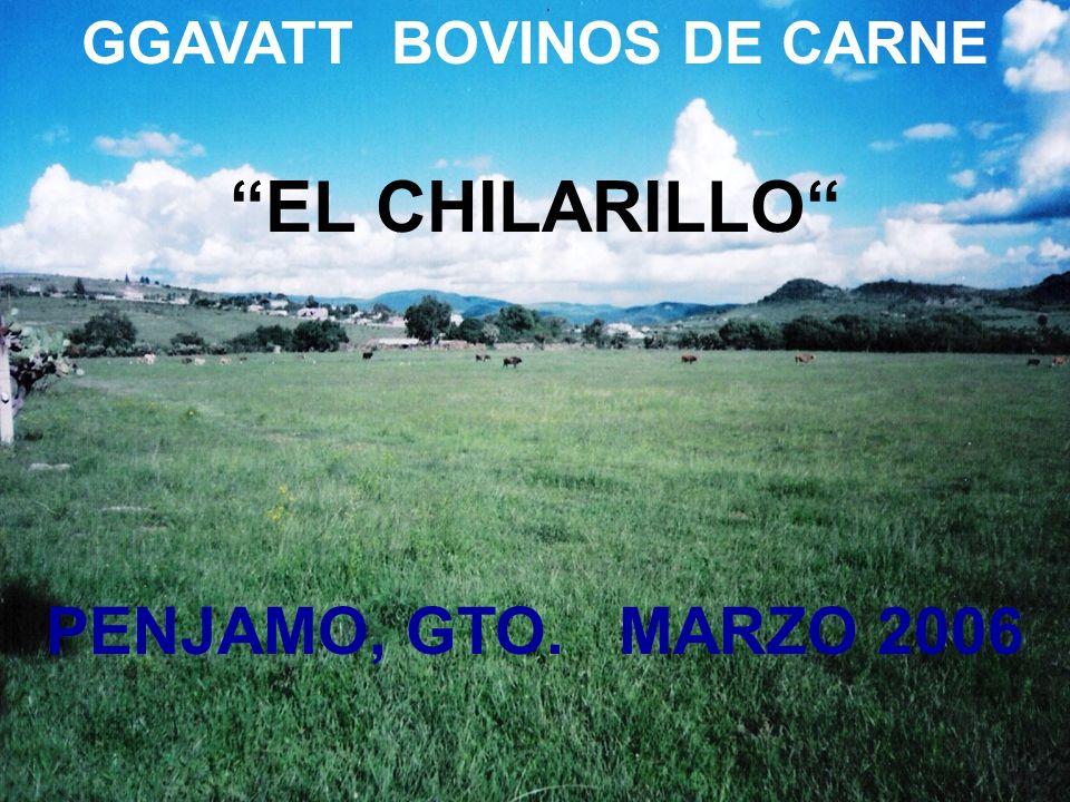 GGAVATT BOVINOS DE CARNE EL CHILARILLO PENJAMO, GTO. MARZO 2006