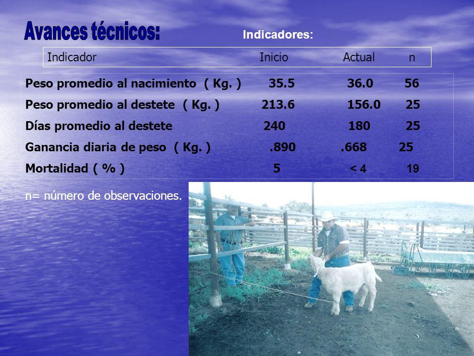 Indicadores: Indicador Inicio Actual n Peso promedio al nacimiento ( Kg. ) 35.5 36.0 56 Peso promedio al destete ( Kg. ) 213.6 156.0 25 Días promedio