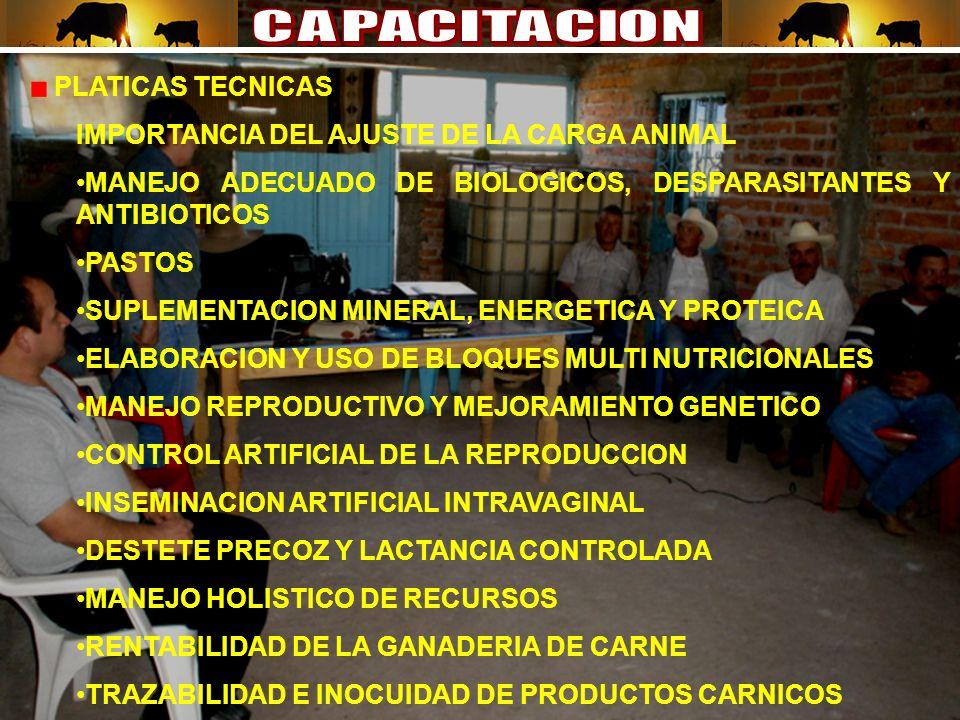 PLATICAS TECNICAS IMPORTANCIA DEL AJUSTE DE LA CARGA ANIMAL MANEJO ADECUADO DE BIOLOGICOS, DESPARASITANTES Y ANTIBIOTICOS PASTOS SUPLEMENTACION MINERAL, ENERGETICA Y PROTEICA ELABORACION Y USO DE BLOQUES MULTI NUTRICIONALES MANEJO REPRODUCTIVO Y MEJORAMIENTO GENETICO CONTROL ARTIFICIAL DE LA REPRODUCCION INSEMINACION ARTIFICIAL INTRAVAGINAL DESTETE PRECOZ Y LACTANCIA CONTROLADA MANEJO HOLISTICO DE RECURSOS RENTABILIDAD DE LA GANADERIA DE CARNE TRAZABILIDAD E INOCUIDAD DE PRODUCTOS CARNICOS