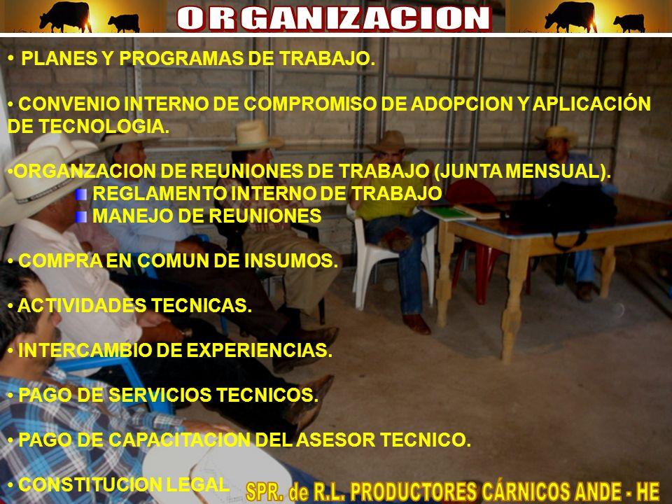 PLANES Y PROGRAMAS DE TRABAJO.