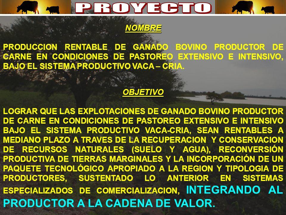 OBJETIVO LOGRAR QUE LAS EXPLOTACIONES DE GANADO BOVINO PRODUCTOR DE CARNE EN CONDICIONES DE PASTOREO EXTENSIVO E INTENSIVO BAJO EL SISTEMA PRODUCTIVO VACA-CRIA, SEAN RENTABLES A MEDIANO PLAZO A TRAVES DE LA RECUPERACION Y CONSERVACION DE RECURSOS NATURALES (SUELO Y AGUA), RECONVERSIÓN PRODUCTIVA DE TIERRAS MARGINALES Y LA INCORPORACIÓN DE UN PAQUETE TECNOLÓGICO APROPIADO A LA REGION Y TIPOLOGIA DE PRODUCTORES, SUSTENTADO LO ANTERIOR EN SISTEMAS ESPECIALIZADOS DE COMERCIALIZACION, INTEGRANDO AL PRODUCTOR A LA CADENA DE VALOR.