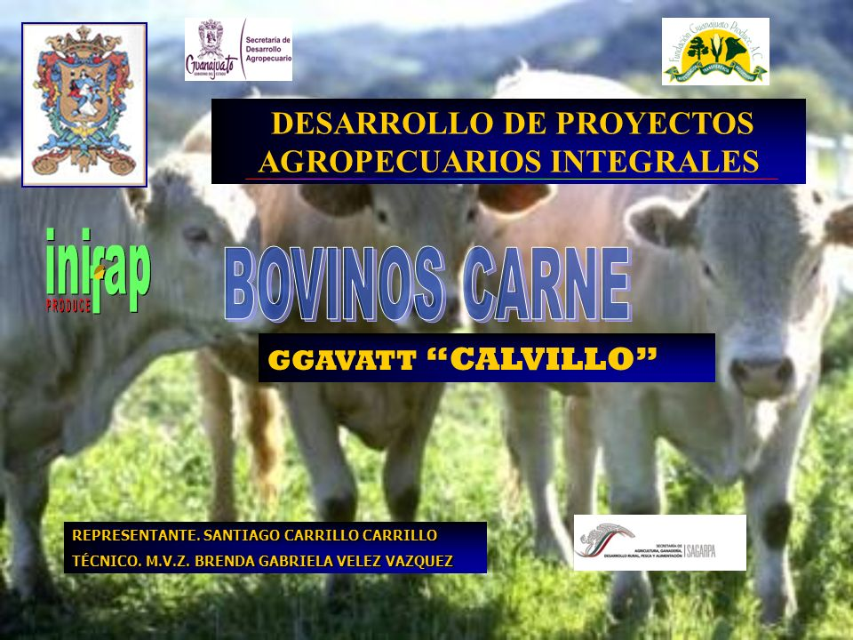 REPRESENTANTE. SANTIAGO CARRILLO CARRILLO TÉCNICO. M.V.Z. BRENDA GABRIELA VELEZ VAZQUEZ DESARROLLO DE PROYECTOS AGROPECUARIOS INTEGRALES GGAVATT CALVI