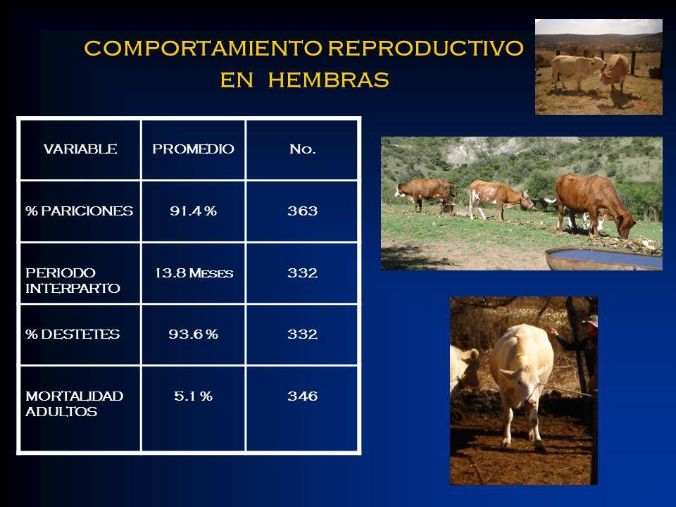 comportamiento reproductivo en hembras VARIABLEPROMEDIONo. % PARICIONES91.4 %363 PERIODO INTERPARTO 13.8 Meses332 % DESTETES93.6 %332 MORTALIDAD ADULT