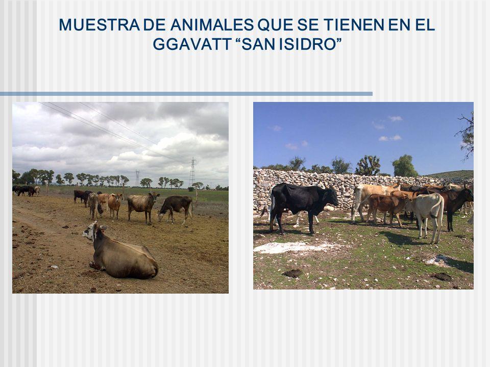 MUESTRA DE ANIMALES QUE SE TIENEN EN EL GGAVATT SAN ISIDRO