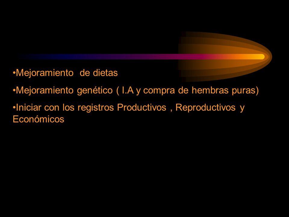 Mejoramiento de dietas Mejoramiento genético ( I.A y compra de hembras puras) Iniciar con los registros Productivos, Reproductivos y Económicos