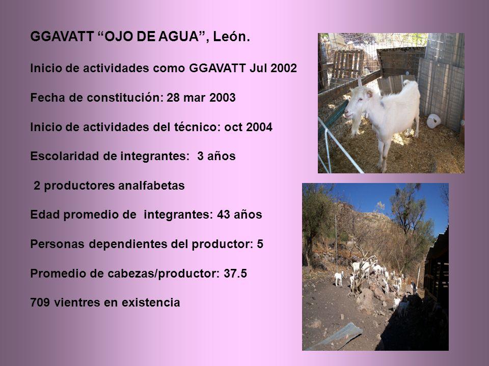 GGAVATT OJO DE AGUA, León.