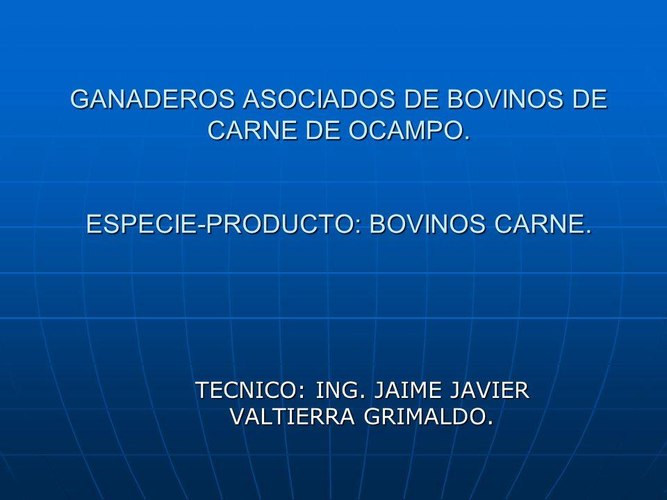 GANADEROS ASOCIADOS DE BOVINOS DE CARNE DE OCAMPO. ESPECIE-PRODUCTO: BOVINOS CARNE. TECNICO: ING. JAIME JAVIER VALTIERRA GRIMALDO.