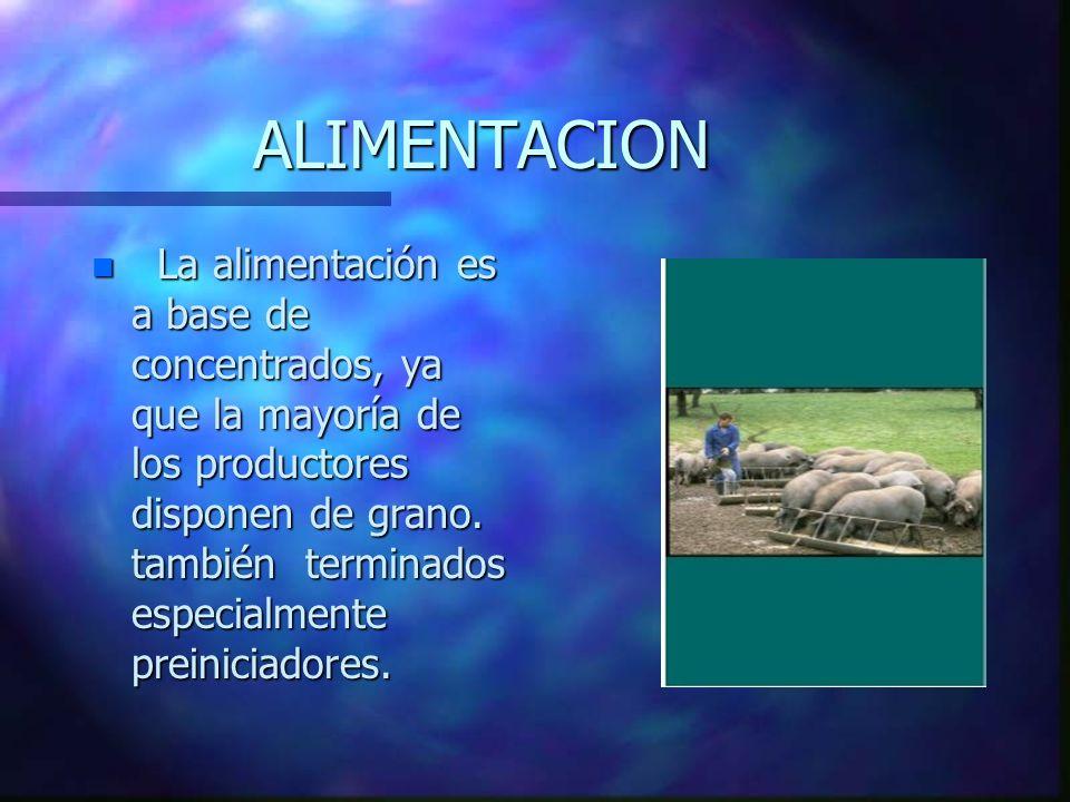 ALIMENTACION n La alimentación es a base de concentrados, ya que la mayoría de los productores disponen de grano.