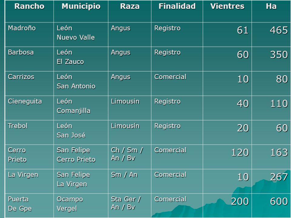 RanchoMunicipioRazaFinalidadVientresHa PuertaMagdalenaOcampoVergel Comercial70400 RinconCaballosLeón Hda.
