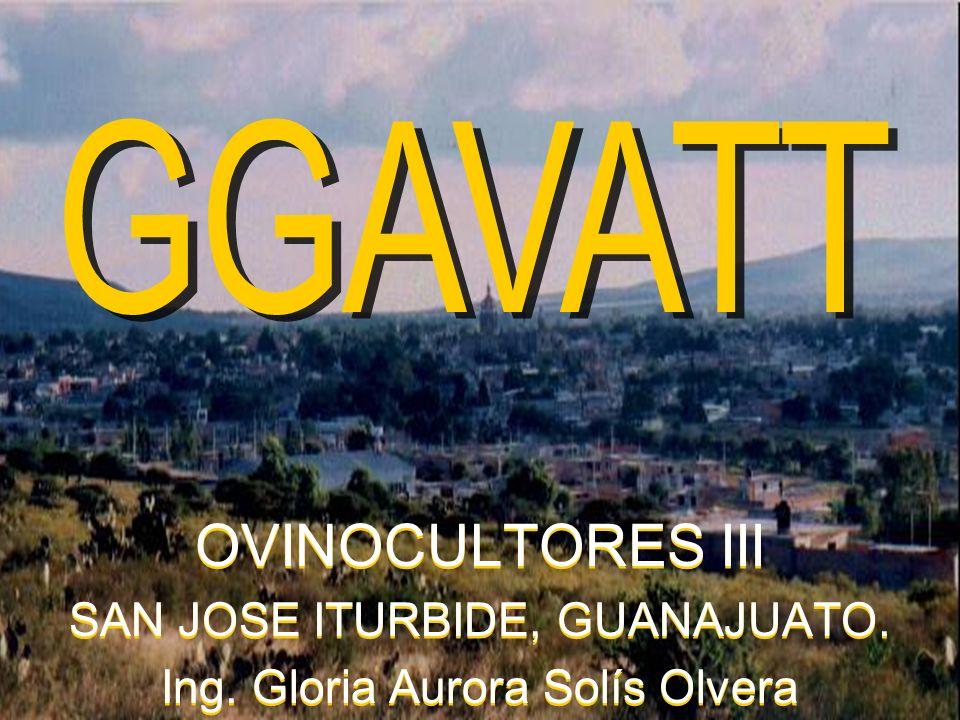 OVINOCULTORES III SAN JOSE ITURBIDE, GUANAJUATO.Ing.