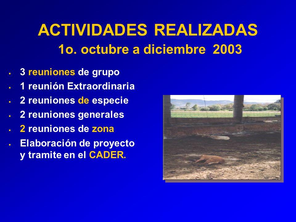 ACTIVIDADES REALIZADAS 1o.