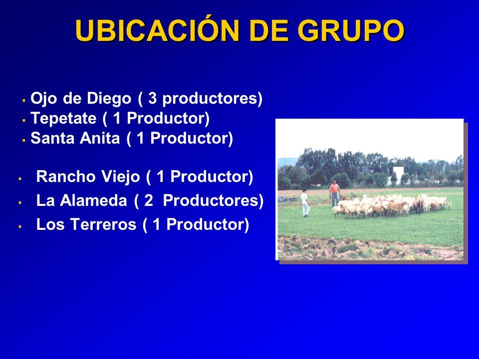 UBICACIÓN DE GRUPO Rancho Viejo ( 1 Productor) La Alameda ( 2 Productores) Los Terreros ( 1 Productor) Ojo de Diego ( 3 productores) Tepetate ( 1 Productor) Santa Anita ( 1 Productor)