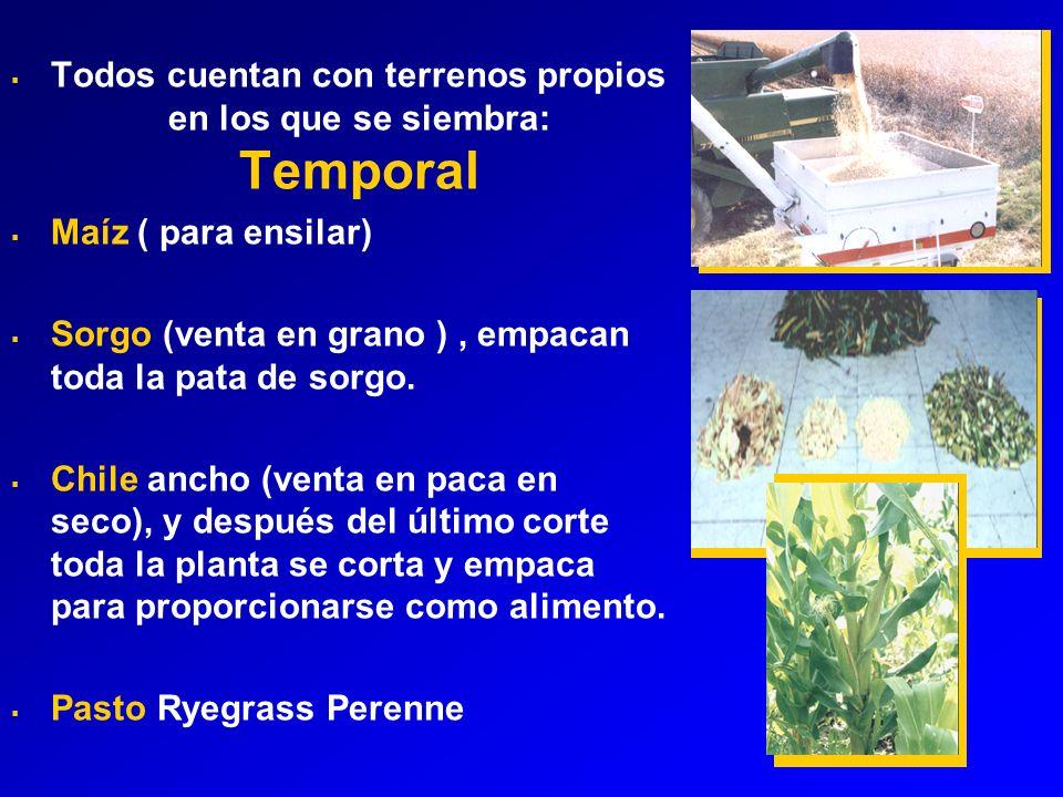 Todos cuentan con terrenos propios en los que se siembra: Temporal Maíz ( para ensilar) Sorgo (venta en grano ), empacan toda la pata de sorgo.