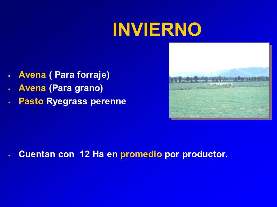 INVIERNO Avena ( Para forraje) Avena (Para grano) Pasto Ryegrass perenne Cuentan con 12 Ha en promedio por productor.
