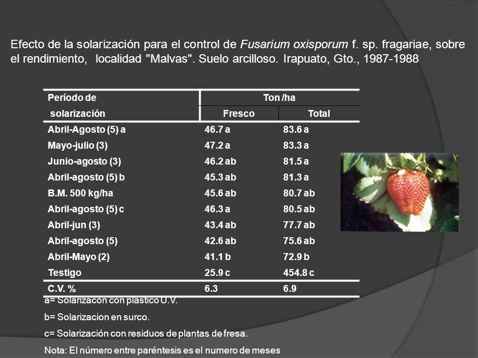 a= Solarizacón con plastico U.V. b= Solarizacion en surco. c= Solarización con residuos de plantas de fresa. Nota: El número entre paréntesis es el nu