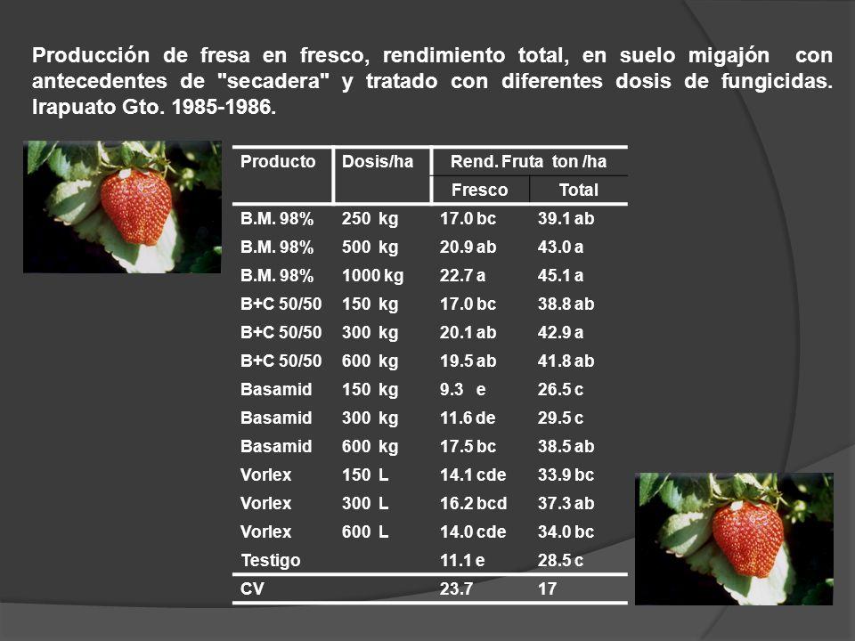 ProductoDosis/haRend. Fruta ton /ha FrescoTotal B.M. 98%250 kg17.0 bc39.1 ab B.M. 98%500 kg20.9 ab43.0 a B.M. 98%1000 kg22.7 a45.1 a B+C 50/50150 kg17
