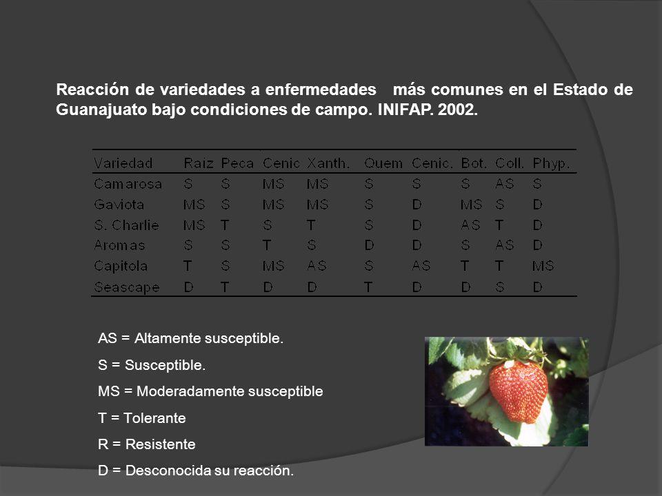 Reacción de variedades a enfermedades más comunes en el Estado de Guanajuato bajo condiciones de campo. INIFAP. 2002. AS = Altamente susceptible. S =