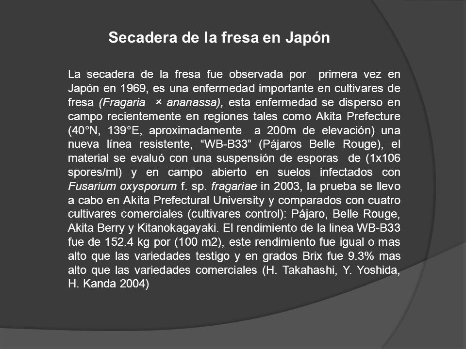 La secadera de la fresa fue observada por primera vez en Japón en 1969, es una enfermedad importante en cultivares de fresa (Fragaria × ananassa), est
