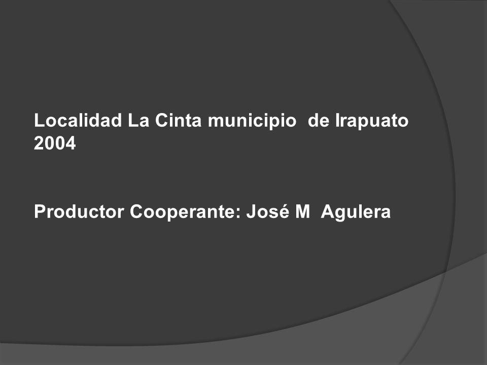 Localidad La Cinta municipio de Irapuato 2004 Productor Cooperante: José M Agulera