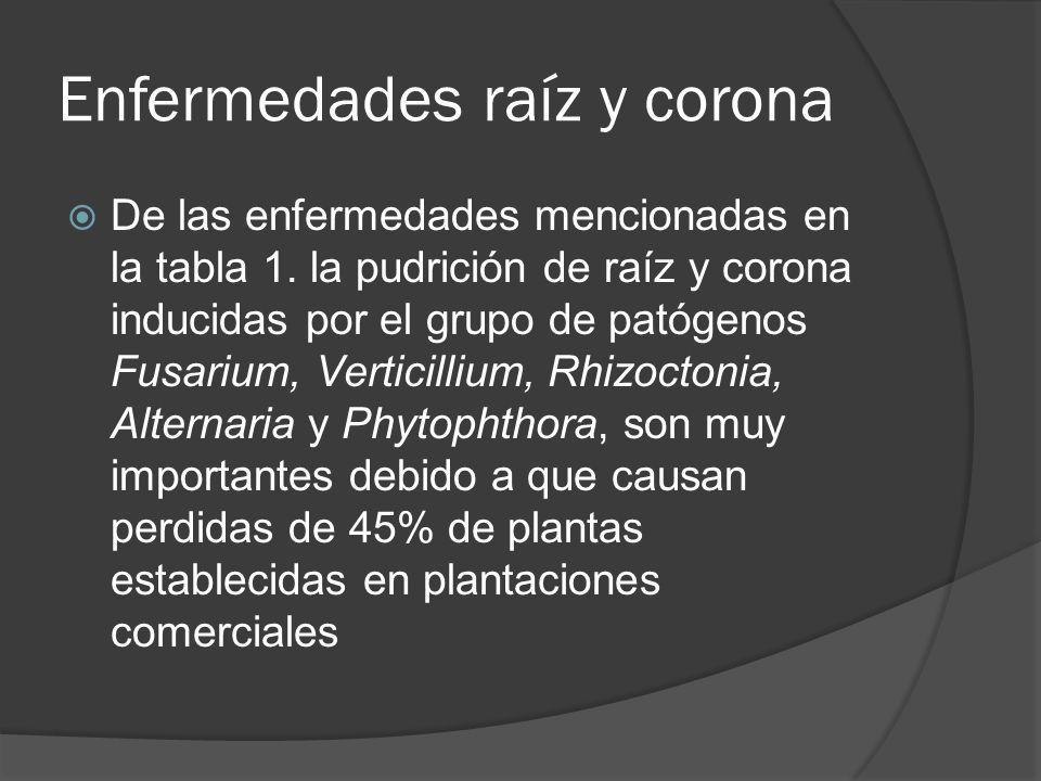Enfermedades raíz y corona De las enfermedades mencionadas en la tabla 1. la pudrición de raíz y corona inducidas por el grupo de patógenos Fusarium,