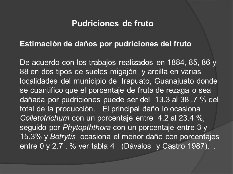 Pudriciones de fruto Estimación de daños por pudriciones del fruto De acuerdo con los trabajos realizados en 1884, 85, 86 y 88 en dos tipos de suelos