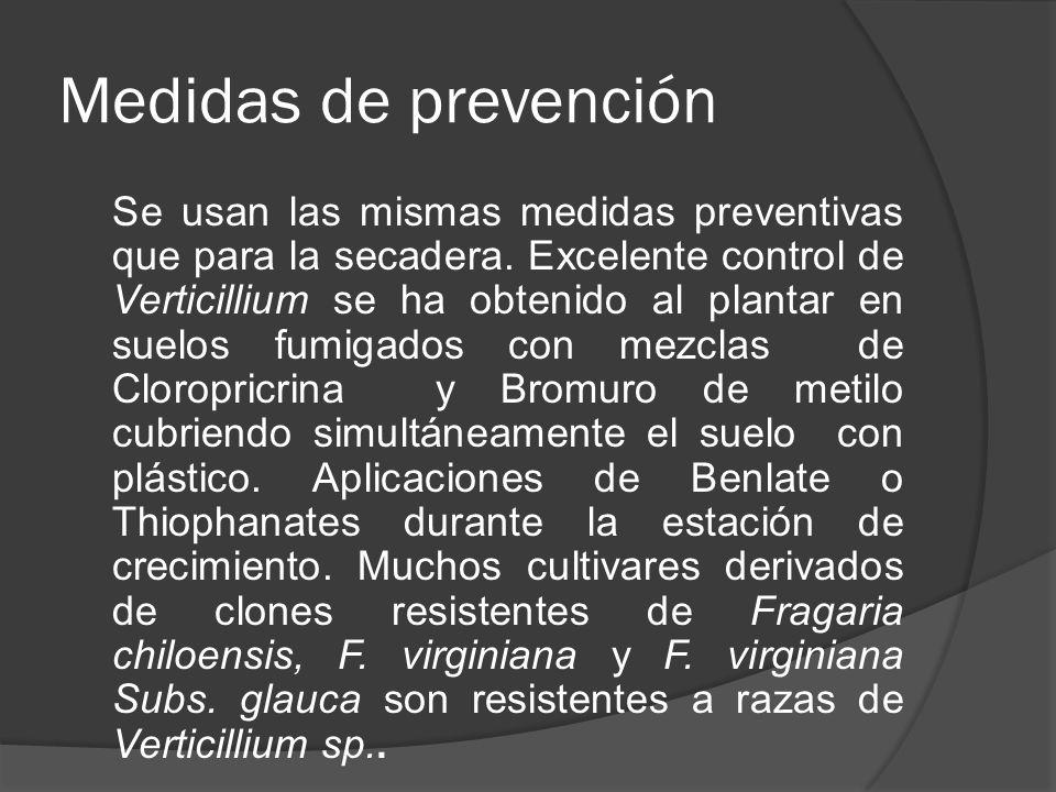 Medidas de prevención Se usan las mismas medidas preventivas que para la secadera. Excelente control de Verticillium se ha obtenido al plantar en suel