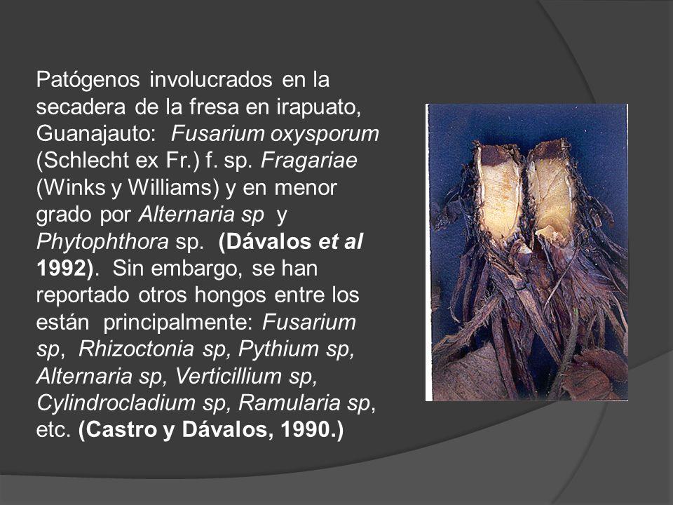 Patógenos involucrados en la secadera de la fresa en irapuato, Guanajauto: Fusarium oxysporum (Schlecht ex Fr.) f. sp. Fragariae (Winks y Williams) y
