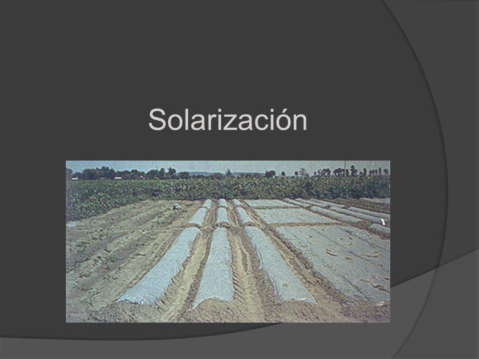Solarización