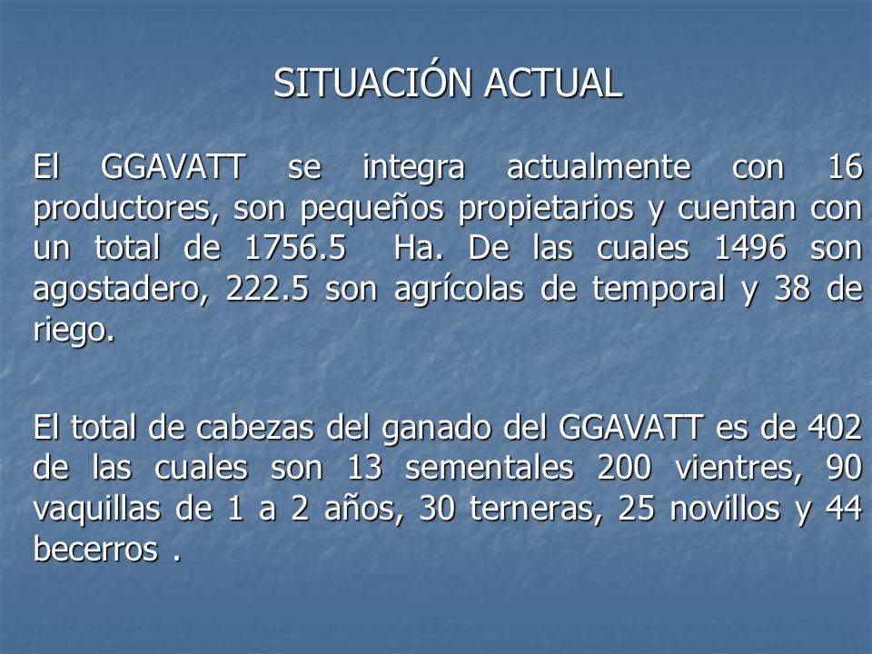 SITUACIÓN ACTUAL El GGAVATT se integra actualmente con 16 productores, son pequeños propietarios y cuentan con un total de 1756.5 Ha. De las cuales 14